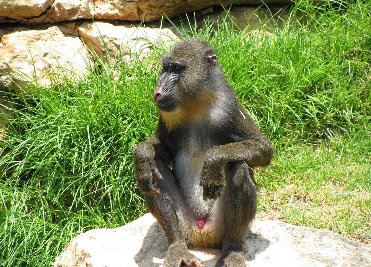monkey-89092_1280