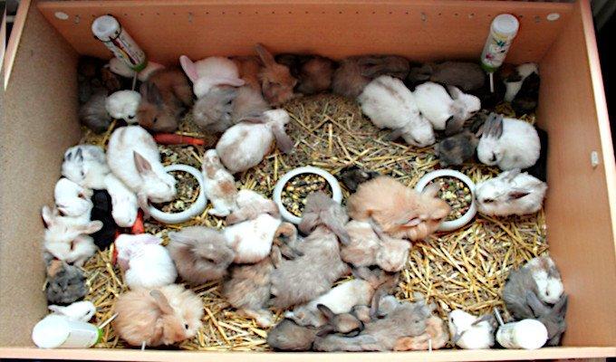 Kaninchenzucht, exponentielle Vermehrung